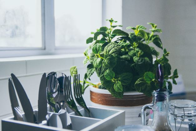 A pot of mint herbs growing next to a kitchen sink
